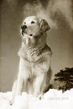 love ciscolo doggy pics :)