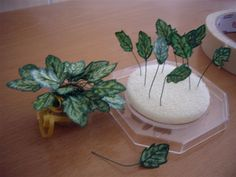 how to: miniature house plant