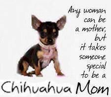 Proud Chihuahua Mom <3