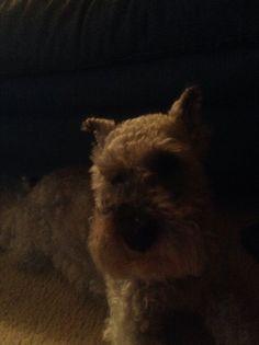 My puppy Rudy!