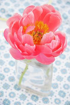 Guava Peony by © acreativemint, via Flickr.com