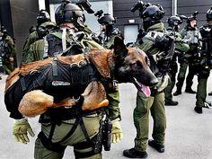 victran:  house-of-gnar:  Nationella Insatsstyrkan, a special... deploying #doge