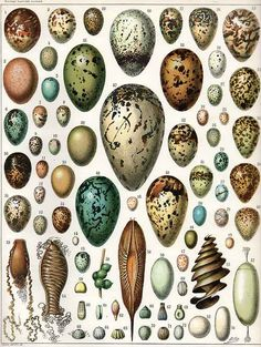 Eggs, illustration by Adolphe Millot (1857-1921)  from Nouveau Larousse Illustré [1897-1904].