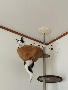B8I3TkeCQAEz-CB ハンモックが壊れても動じない猫 http://hamusoku.com/archives/8692500.html