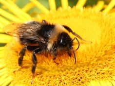 Pesticides linked to 'large-scale population extinctions' of wild bees   Science   News   The Independent