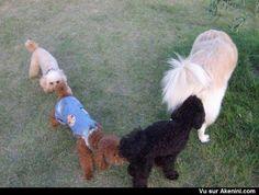 Des chiens à la queuleuleu - Funny Dogs