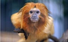 France zoo searches for 'extremely rare' stolen monkeys