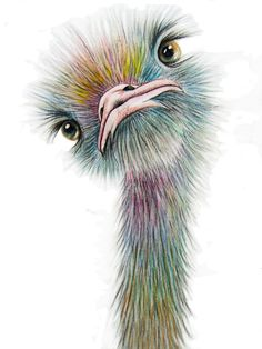 OSTRICH 2 Art Signed Print from an original watercolour by Vivaci