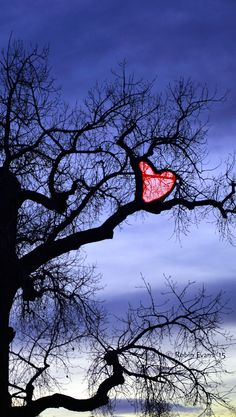 ~~Happy Valentine's Day! To All My Pinterest Friends ♥ by Robin Evans~~