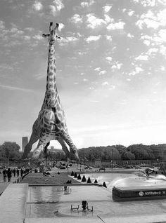 Girafa Eiffel