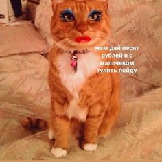 by МЕМЫ ❌ Wtf Funny, Funny Memes, Blue Aesthetic Pastel, I Love Rain, My Mood, Post Punk, Cringe, Kittens, Like4like