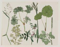 Dirk van Gelder, Wild Plants, 1925, pen and ink and watercolour, 22.8 x 29.2 cm
