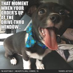 Dog Advice: always celebrate the little joys in life... ;)  #thefoodhappies #mcaspets #adopt
