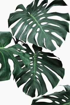 Beautiful Tropical Leaves Watercolor House Plants Posters Fine Art Canvas Prints Nordic Style Interior Decoration For Modern Kitchen Living Rooms - Beautiful Tropical Leaves Watercolor House Plants Posters Fine Art Canvas Prints – NordicWallArt. Plant Painting, Plant Art, Plant Aesthetic, Blue Aesthetic, Wall Collage, Canvas Wall Art, Images Murales, Wall Prints, Canvas Prints