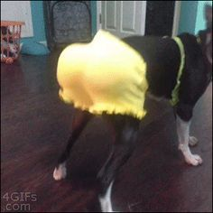 This dog whose twerking inspired a movement.   The 47 Absolute Greatest Dog GIFs Of 2013