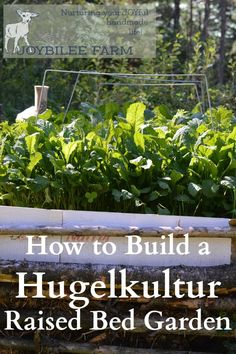 Hugelcultur is an ancient form of composting that utilizes woody waste as the carbon substrata, to retain soil moisture and soil fertility. You can utilize the principles of hugelcultur by simply burying wood waste throughout your yard and garden, in order to increase the moisture holding capacity and fertility of your soil. It breaks down slowly over several seasons. A hugelcultur raised bed is a garden in its own right. It can be any size or shape that you wish, although most hugelcultur…