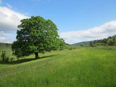 slovenian tree