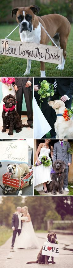 wedding fog ideas -get a doggie attendant to help keep the day manageable