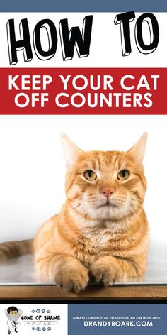 Train cats to stay off counter! Cat training doesn't have to be an oxymoron...