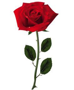 Gėlės ir viskas apie jas, nuo patarimų kaip auginti iki nuotraukų galerijų su naujausiomis gėlių rūšymis. Greit startuos parduotuvė - Gėlės į namus.