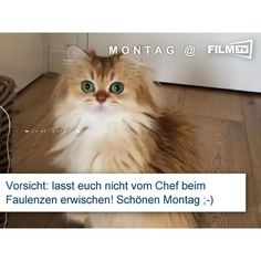 #montag Start in die Woche deluxe.. :) #cat #catvideo #caught