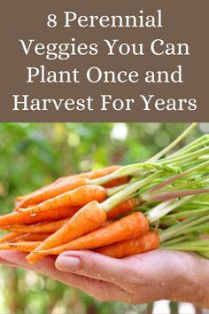 Fast Growing Vegetables, Perennial Vegetables, Fast Growing Plants, Fruits And Vegetables, Gardening Vegetables, Container Vegetables, Garden Soil, Edible Garden, Garden Tips