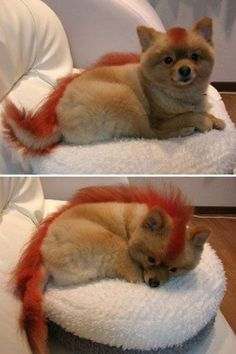 Dog grooming at its best…