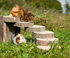 Log steps for the fur baby bunnies and guinea pigs.