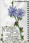 God of Grace quote with Aster flowers at scratchmadejournal.com
