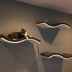 Informations About Cat shelves, cat bed, floating cat shelf, floating shelves white, wall shelves. Floating Cat Shelves, Cat Wall Shelves, Cat Wall Furniture, Cat Steps, Cat Perch, Cat Playground, Cat Tunnel, Cat Room, Pet Beds