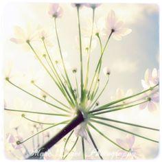Colour – Delicate Flowers #3 – a unique product by Marcolagrenouille on DaWanda