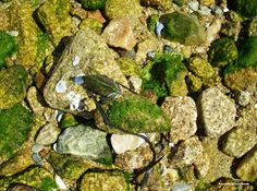 Shells, stones and algae :)