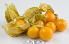 Cape Gooseberry - Search by flavors, find similar varieties and discover new uses for ingredients @ preppings.com