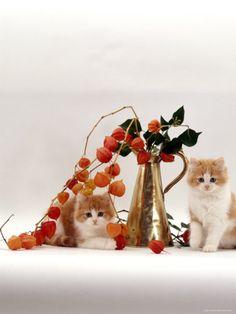 Cyoot kitties!