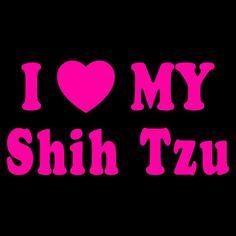 I love my shih Tzu!