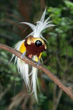 Pictures of exotic birds..not sure exactly what this is but it is interesting.