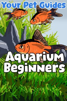 Tired of browsing for Aquarium filters? We've got Guides for different fish species, product comparisons and Care Guides to keep your fish happy and healthy. Aquarium Store, Diy Aquarium, Saltwater Aquarium, Aquarium Setup, Aquarium Ideas, Pet Fish, Pet Goldfish, Automatic Fish Feeder, Marvel And Dc Characters