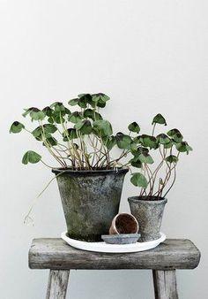 Lisää vihreitä kuvia + kirja lähtee - New Deko Sites Ikebana, Pot Jardin, Deco Nature, Decoration Plante, Plants Are Friends, Interior Plants, Room Interior, Interior Design, Arte Floral