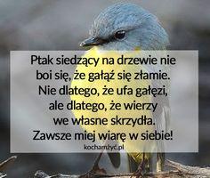 Ptak siedzący na drzewie nie  boi się że...