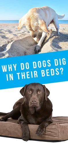 Dog Health Tips, Dog Varieties, Happy Puppy, Wild Dogs, Dog Behavior, Dog Quotes, Dog Care, I Love Dogs, Dog Training