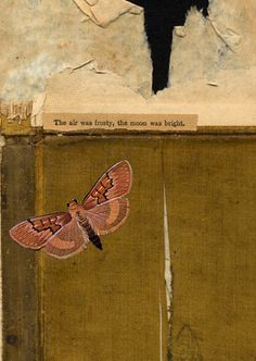 The moon was bright David Wallace, Collage Art, Collages, Insects, Moon, Bright, Animals, Painting, Illustrations