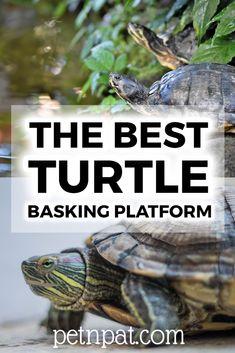 The Best Turtle Basking Platform | Prevent Shell Rot  #turtle #aquarium #fishtank #pets #animals #tank Animals For Kids, Cute Baby Animals, Animals And Pets, Funny Animals, Animal Memes, Farm Animals, Turtle Aquarium, Turtle Pond, Aquarium Fish