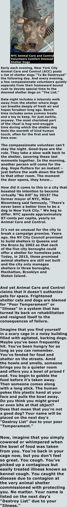 THE TRUTH ABOUT NYCACC SHELTERS http://www.thepetmatchmaker.com/nyc-animal-care-and-control-comfort-doomed-shelter-dogs/