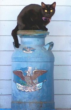 Cat on Milk Can