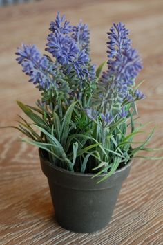Small Lavender Pot Lavender, Shabby, Plants, Gifts, Gardens, Decor, Flowers, Presents, Dekoration