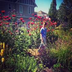 Blakeburn Elementary School Bee, Bird and Butterfly Garden