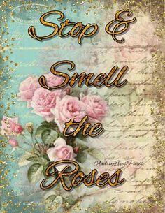 Calligraphy, Rose, Garden, Art, Art Background, Lettering, Pink, Garten, Lawn And Garden