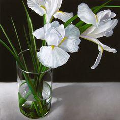"White Iris 8""x 8"" - oil on hardboard by M Collier"