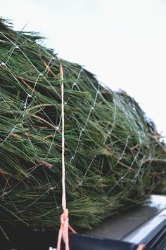 If you get a tree wrapped like this, be sure to cut up that plastic, so no animal gets it's head stuck in there, & it may end up in the ocean, where much of our trash goes.  .