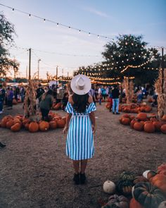 Hall's Pumpkin Farm: The Best Pumpkin Patch near Dallas Best Pumpkin Patches, Farm Store, Pumpkin Farm, Dallas, October, Good Things, Plants, Plant, Planets